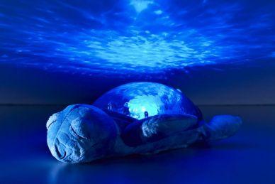 Tranquil Turtle - Ocean