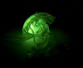 Glow in the Dark Jellyfish